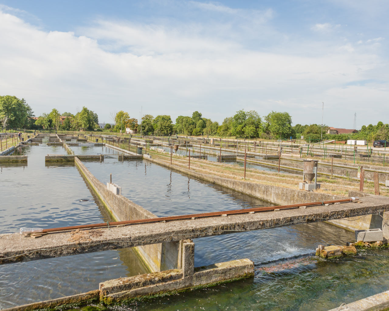 Adamas caviar - Fish Farming caviar