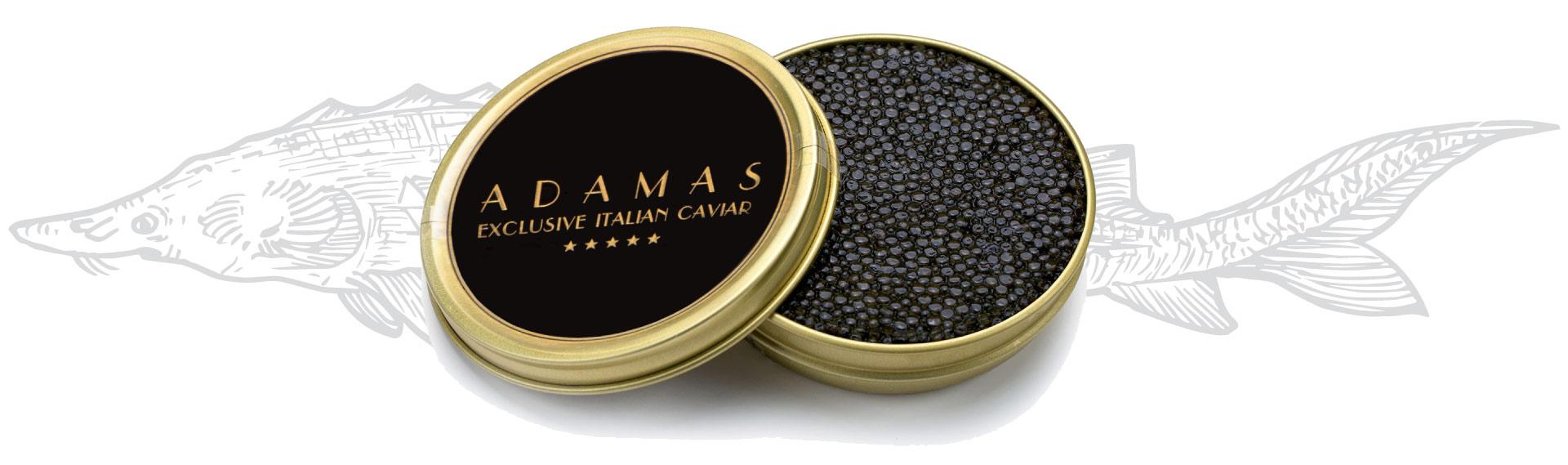 Adamas Caviar - Login